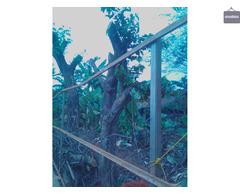 Jasa cabut akar pohon DKI Jakarta wa 085641290679